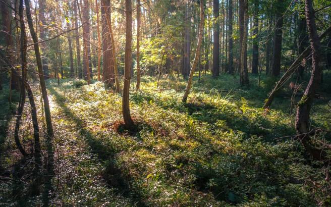 morgensonnenwald-1-von-1